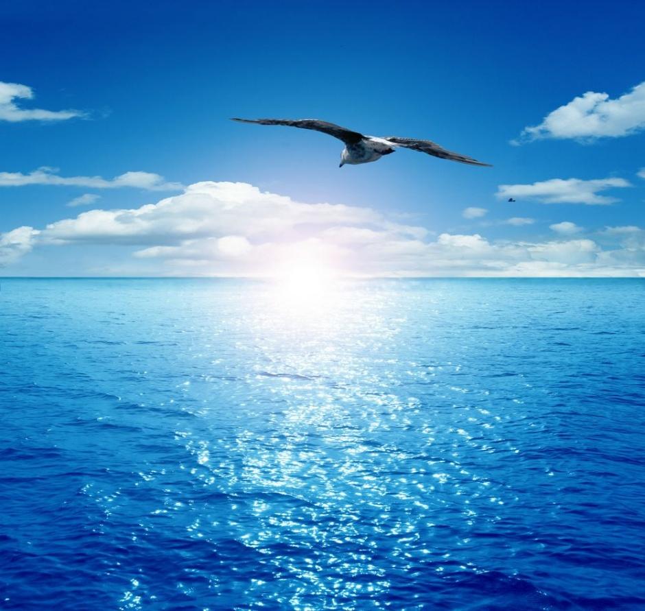 Маме, открытки море и чайки